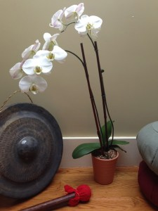 Susan Pollock, orchid and gong in office