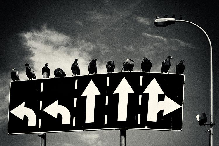 CC/fotocommunity.com/Krzysztof Poltorak