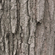 Suburban Tree Trunk: an Attention Restoration Meditation (1 minute)