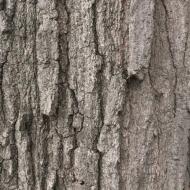 Suburban Tree Trunk (1:01)