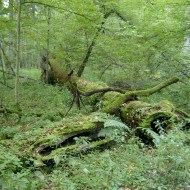 Edge of Alder Swamp: an Attention Restoration Meditation (3 minutes)