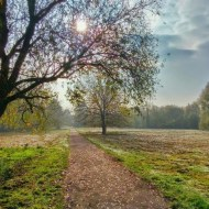 Finding Your Self-Compassion Practice Path online