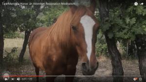 Tara Mandala Horse (1 minute)