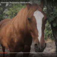Tara Mandala Horse: an Attention Restoration Meditation (1 minute)