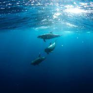 Deep Ocean Breathing (18 minutes)