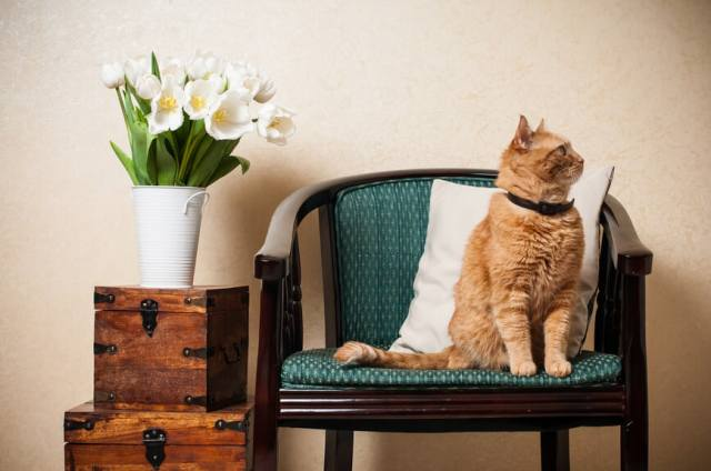 The Atmosphere of Home: Why it's Such a Big Deal | Kristy's Cottage blog