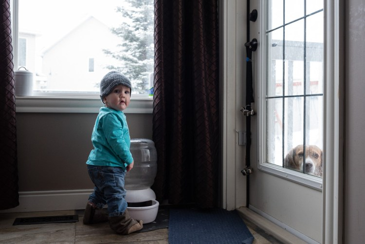A toddler exploring his dog's water dish while the dog peeks in from outside during a documentary family photography session.