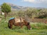 Katharo in spring time