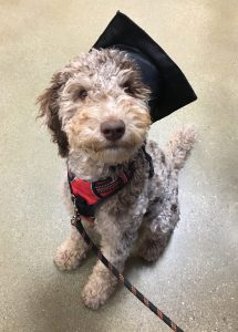 Drover's puppy class graduation
