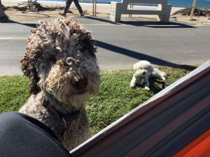 Max and Drover - hammock HB