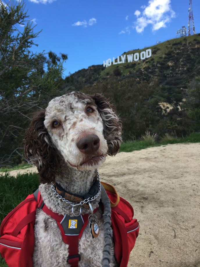 Drover - Hollywood Sign