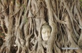 Wat Mahathat, Ayuthaya, the famous head of Buddha in tree roots