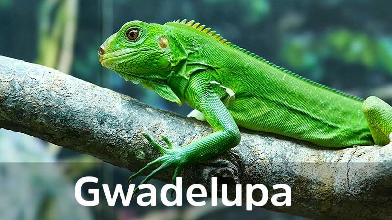 TRAVELERZY - Gwadelupa