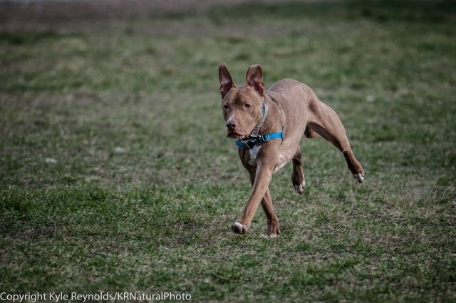 Ithaca Dog Park_November 27, 2015_107