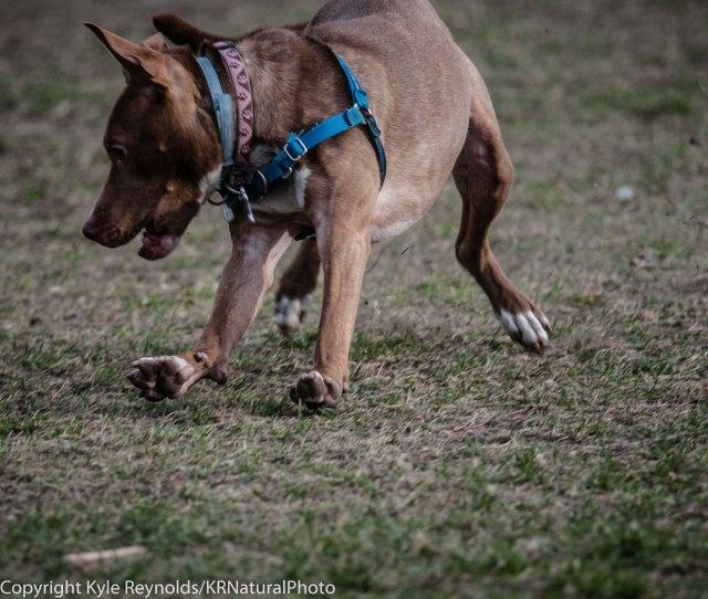 Ithaca Dog Park_November 27, 2015_113