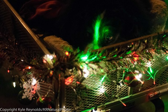 Sparkle Christmas_December 05, 2015_240