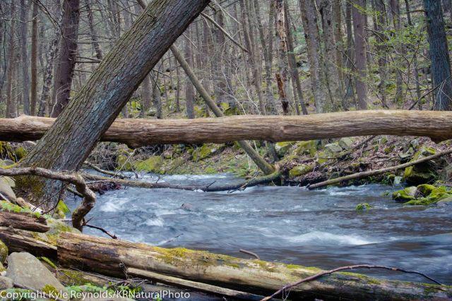 Ravensburg State Park, PA_April 24, 2017_95