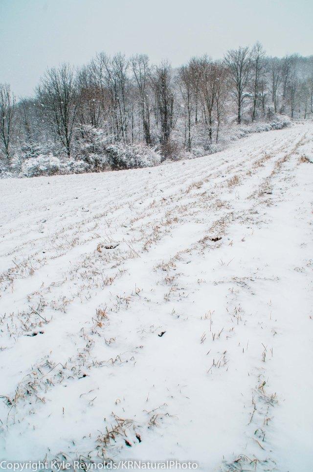 Tanglewood Nature Center - January 13, 2012-183-2