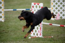Wine Country Circuit Dog Show_September 29, 2017_1940