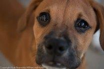 Foster puppies_June 26, 2018_515