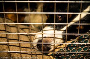 Josie keeping calm in her kennel.