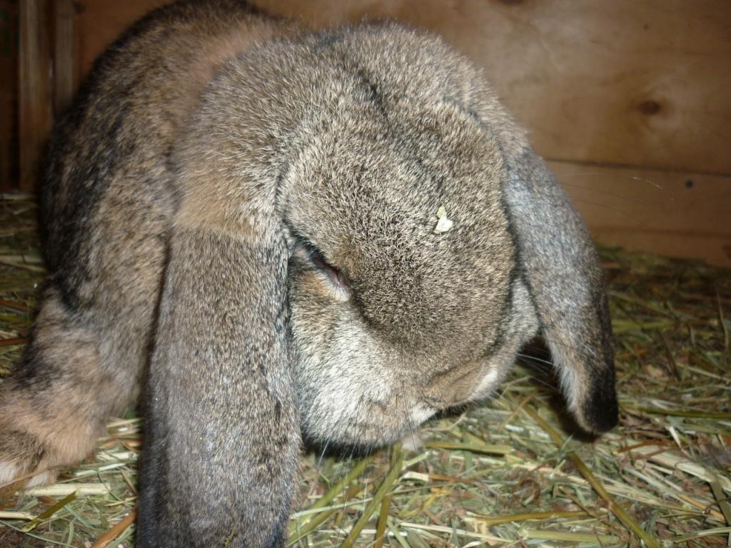 цыганки, найти кроликов с фото в рязани поэтому