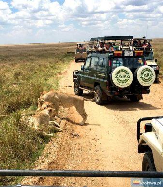 Tanzania zwierzęta