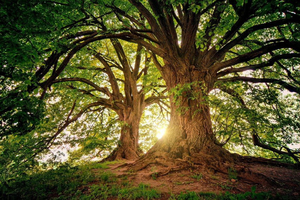 Ort der Ruhe - ein mächtiger Baum