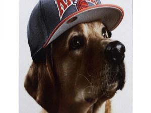 Табличка «Увага!Злий пес!»