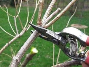 Захист при обрізці рослин