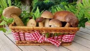 Syötävät ja syötävät sienet, kaksinkertaiset sienet. 16 lajia, joiden otsikot ja kuvaukset (valokuvat ja videot) + arvostelut