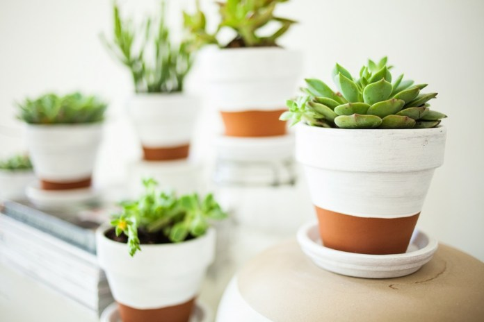 Flower-pots-White-Dipped