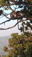 Monkeys at monkey point!