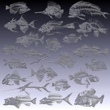 Fossil fishes 3