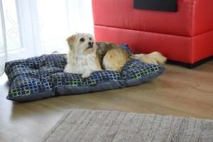 Miejsce psa w domu i 3 kroki do akceptacji nowego legowiska