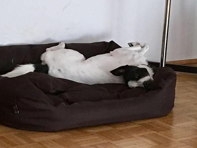 Koleżanka Snupiego na kanapie KryKas
