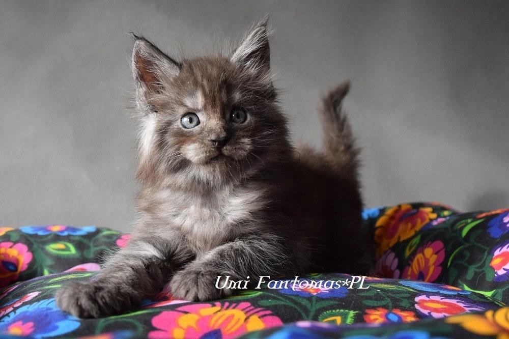 KryKas - Wyprawka dla kociaka + chesklista do pobrania