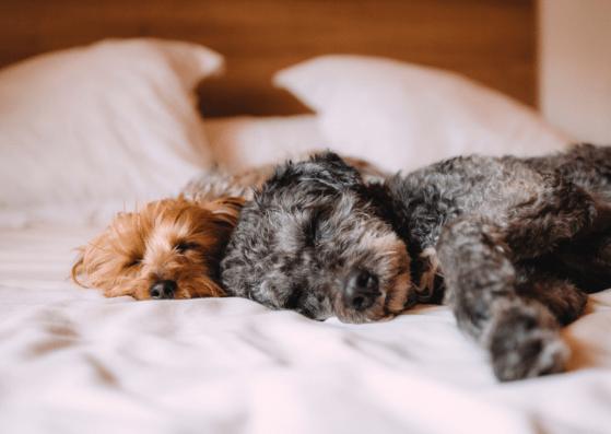 Dlaczego pies chce spać ze mną w łóżku? Poznaj najczęstsze powody.