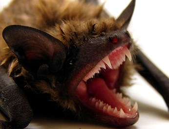 Video Of The Day: Batman Themesong, With Real Bats
