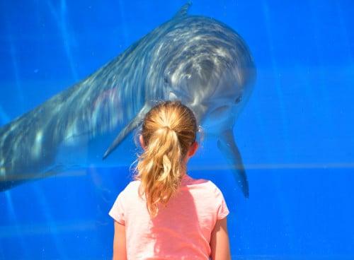 Visit Delfiniti in Ixtapa