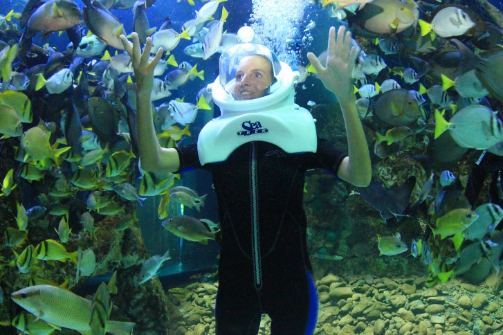 Krystal International Vacation Club Highlights Interactive Aquarium in Cancún (1)
