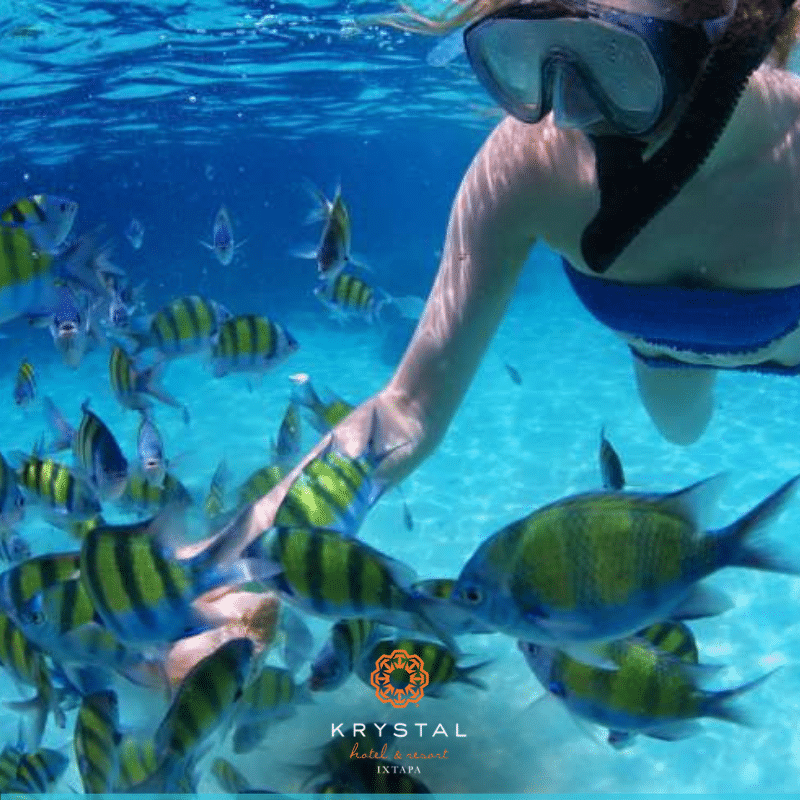 Krystal International Vacation Club Reviews Ixtapa Highlights (3)