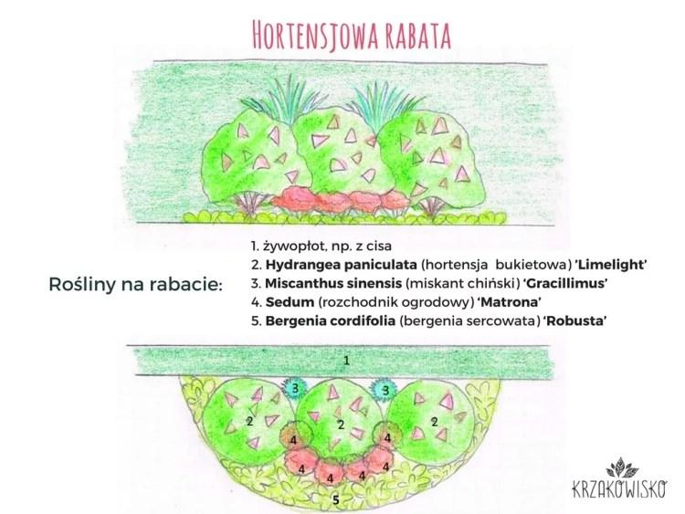 Hortensjowa-rabata-rosliny