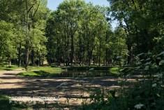 2015-06-05_gorzanow_park_staw (1 von 1)