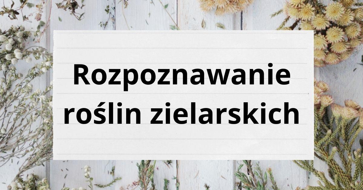 """""""Rozpoznawanie roślin zielarskich"""" w Sobolewie"""