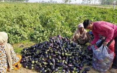 rich vegetable harvest