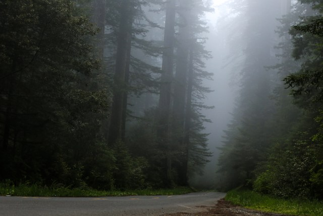 Fog at redwoods national park
