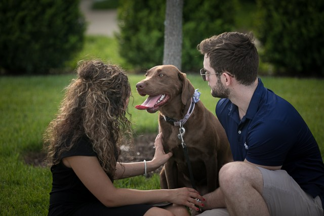 Chocolate lab with her parents