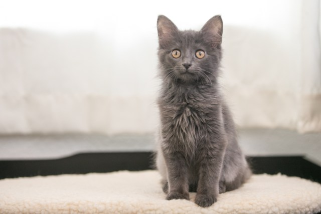 kitten photos by K Schulz Pet Portraits