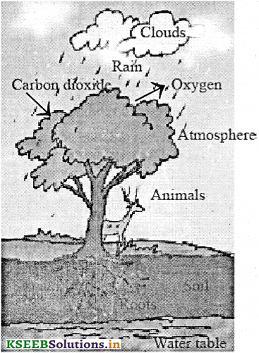 KSEEB Solutions for Class 7 Science Chapter 17 Forests Our Lifeline 2